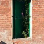 Wild flower blooms in fire exit doorway