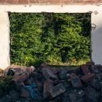 Greenery beyond rubble