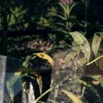 Hover fly lands on leaf beyond smashed windows