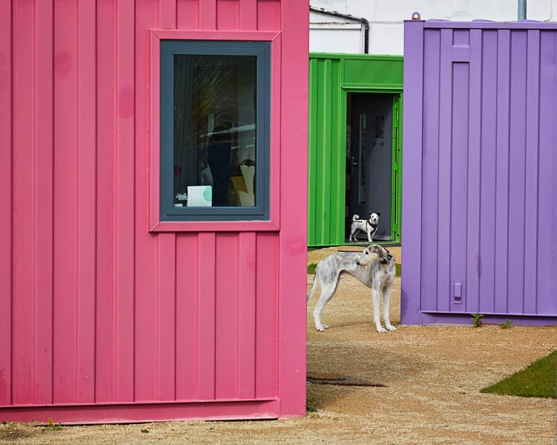 Pet dog Alfie and Jack Russel Smudge at pop-up art event in Bangor