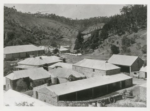 Newman's Nursery in 1890, now in ruins