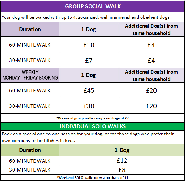 Walking the Dog  Dog Walking service NORTH EAST