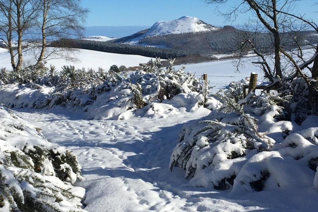 melrose winter