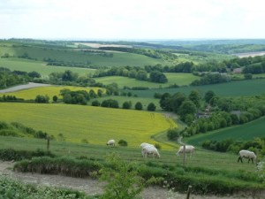 The View From Combe Gibbet