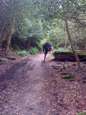 Hampshire Walks New Forest Walking Route Ancient Woodland Trail