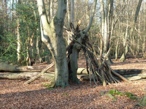 Essex Walks - Epping Forest - Bivouac Near Ambresbury Banks Fort