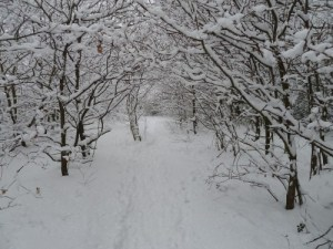 Walks And Walking - Essex Walks - Epping Forest Centenary Walk Video