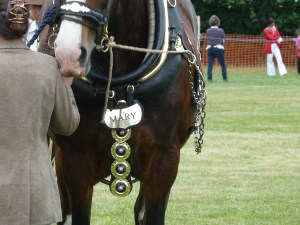 Hertfordshire Heavy Horse Show June 2011 at Capel Manor College Shire Horse in Harness Mary