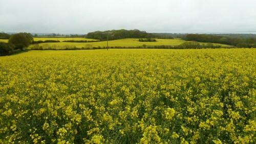 Walks And Walking - East Sussex Walks - Kent Walks - 1066 Country Walk - Walking Route - Rape Fields