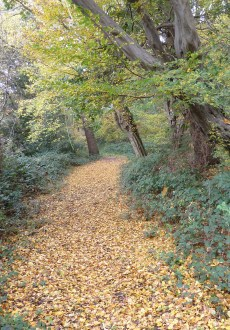 Walks And Walking - Essex Walks The Oak Trail Epping Forest Walking Route - Autumn Path