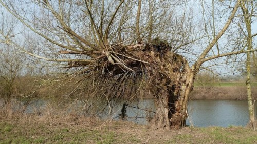 Walks And Walking - Cotswolds Walks Deerhurst Walking Route - Tree By The River Severn