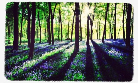 Walks And Walking - Best Bluebell Woods To Visit In The UK 2013