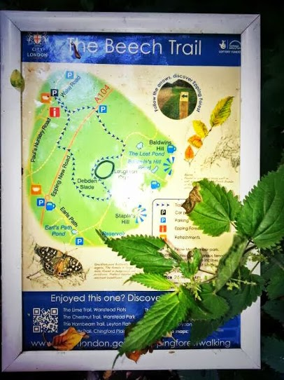 Walks And Walking - Epping Forest The Beech Trail High Beach Walking Route Map