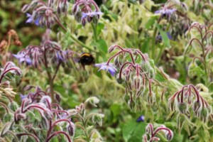 Walks And Walking - Epping Forest Bell Common Walking Route - Bee In Flight