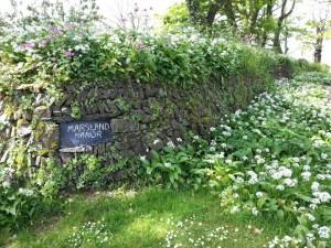 Walks And Walking - Morwenstow Walk In Cornwall - Marsland Manor