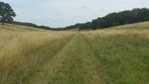 Walks And Walking - Lyminge Walk In Kent - Wide Grassy Path