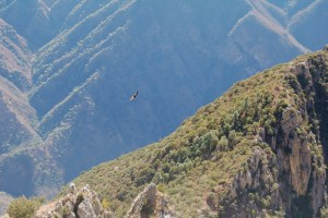 Spectacular Hiking Routes in Mexico - Copper Canyon