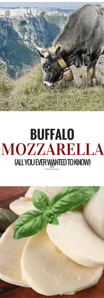 sliced buffalo mozzarella on a board with a sprig of basil, and the buffalo grazing in the field. Learn all about what makes this cheese so delicious!