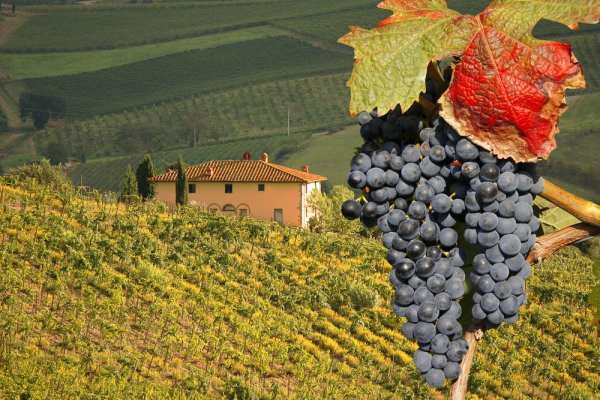 Tasting wine in Tuscany