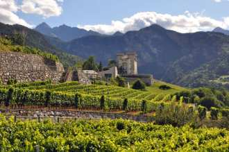 Vineyard of the Caves des Onze Communes in Aymavilles