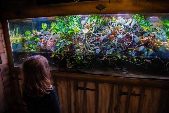 Skegness aquarium (2 of 5)