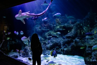 Skegness aquarium (3 of 5)