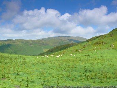 Bryn Tyddynbridell / Tyddynbridell Hill Llethrau Bryn Tyddynbridell / Slopes of Tyddynbridell Hill