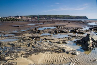 Stumps, pools and a broad view south, Borth sunken forest