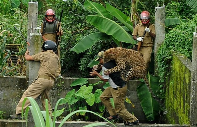 leopard-attack-in-India