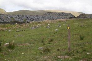 Clogwyn y Gwin Path and Maesgwm (82 of 135)