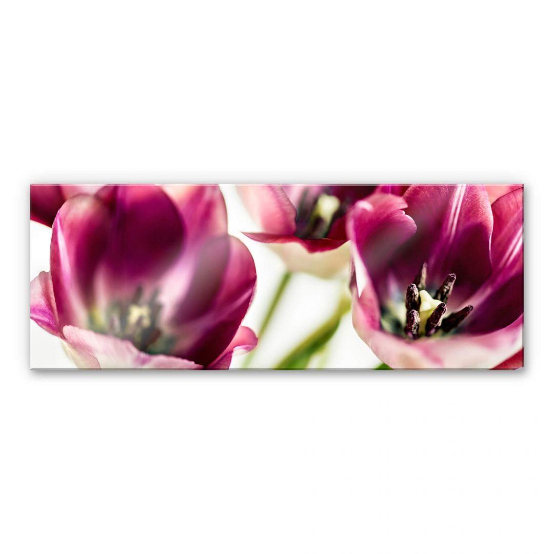 Acrylglasbild Bsmart  Tulips  wallartde