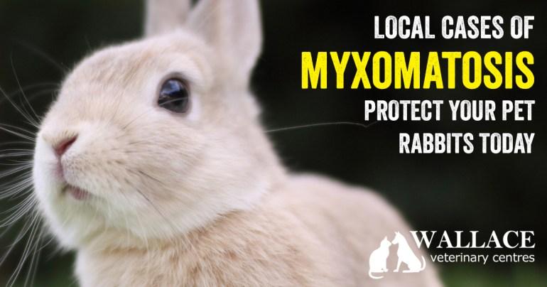 MyxoBlog