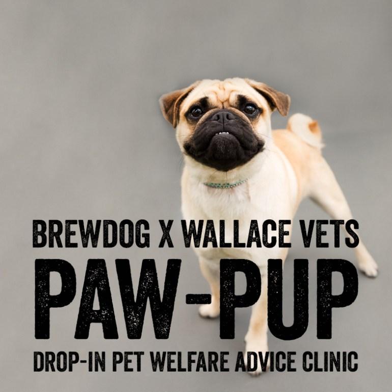 Paw-Pup Sq