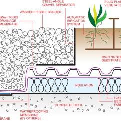 Morphology Tree Diagram Hdmi Wiring How Trees Grow Roots Elsavadorla