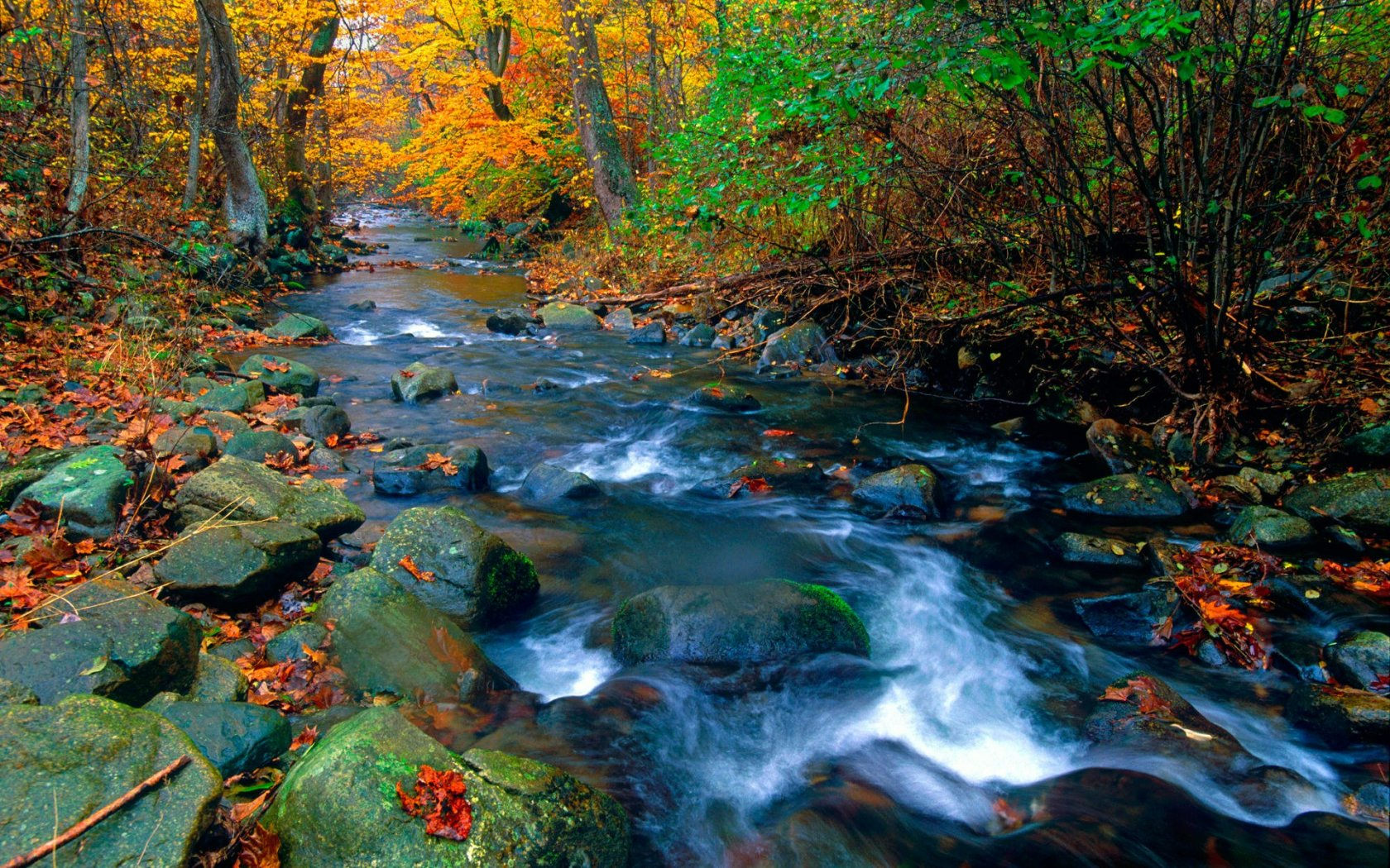 Nature Wallpaper Autumn Fall 1600x1200 Blue Ridge Stream Shenandoah National Park Virginia Forest