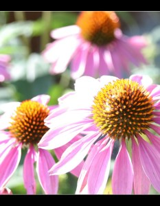 wpwildflowers