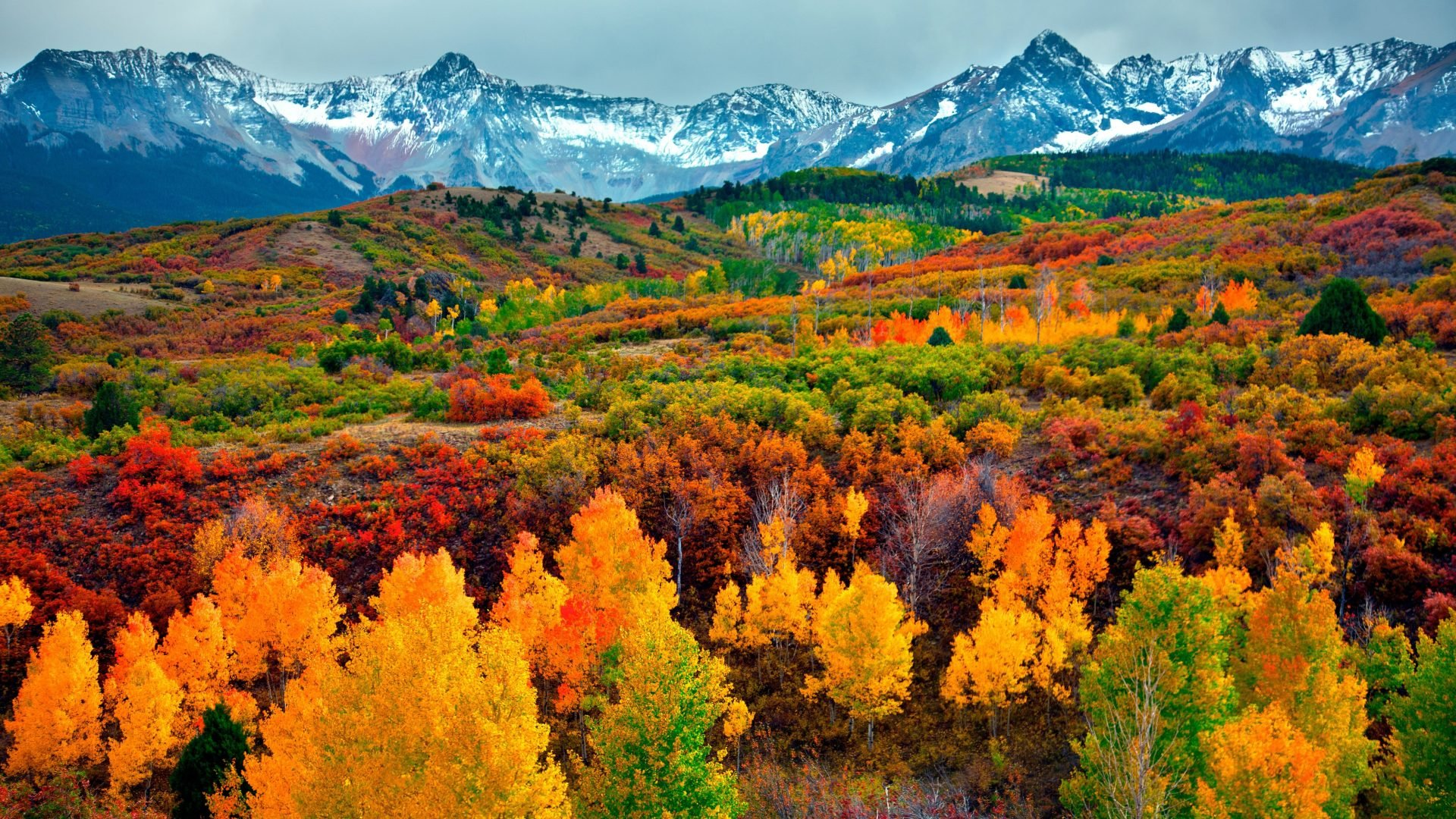 Fall Foliage Hd Wallpaper Lovely Fall Scenery Backgrounds Free Download