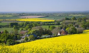 Rapeseed fields yellow summer views over the Meon Valley