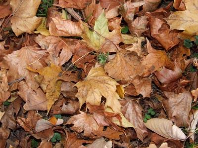 Schne Herbstbilder kostenlos