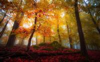 Landscape, Nature, Forest, Fall, Colorful, Trees, Leaves ...