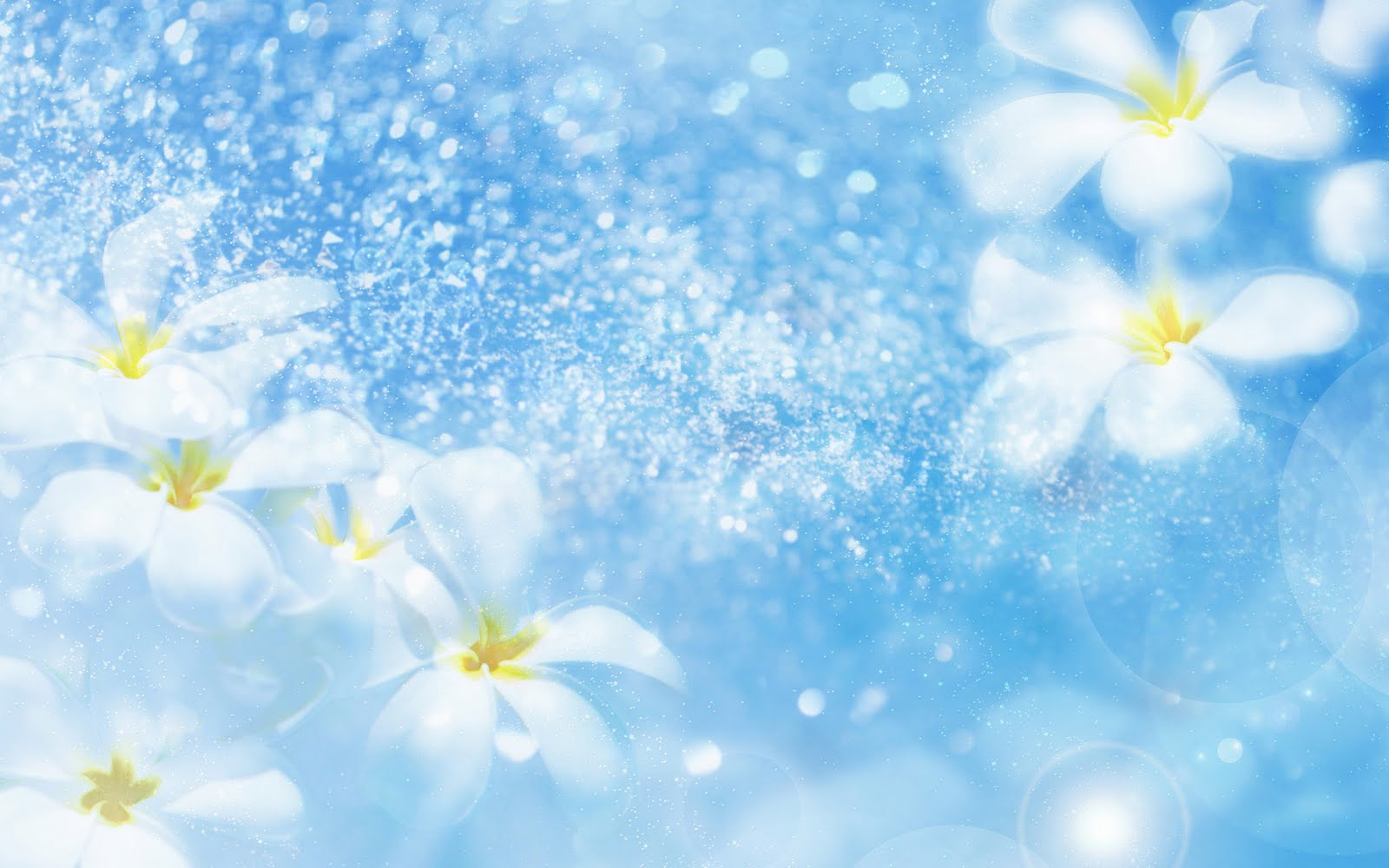 Sony Xperia Hd Wallpaper Free Download Flowers White Blue Background Fresh Lovely Wallpaper