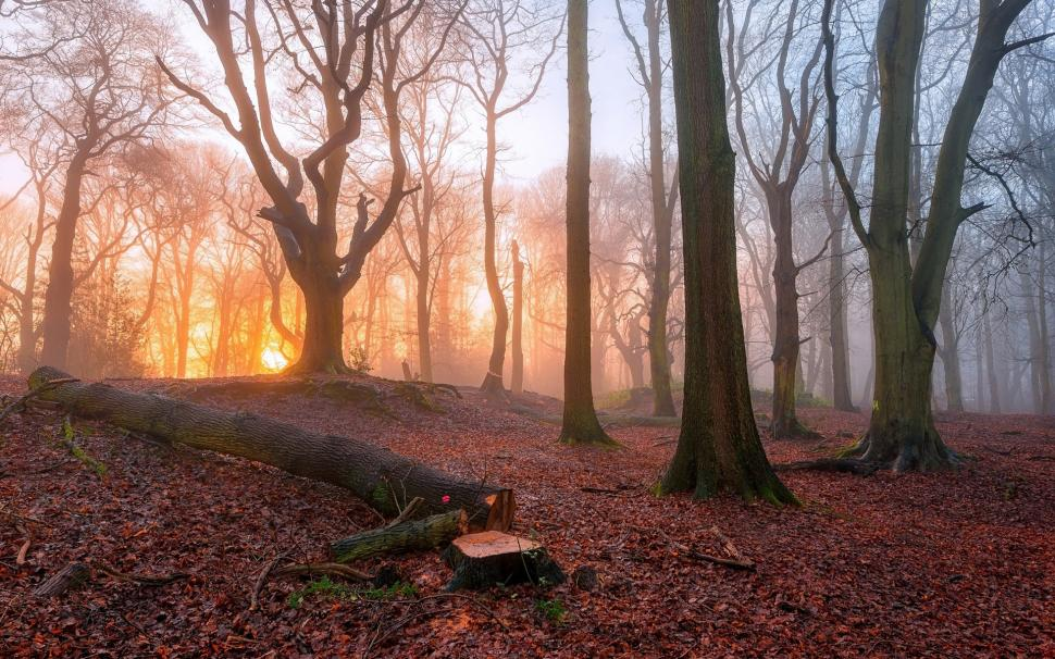 Fall Path Wallpaper Sunrise In The Forest Trees Fog Morning Wallpaper