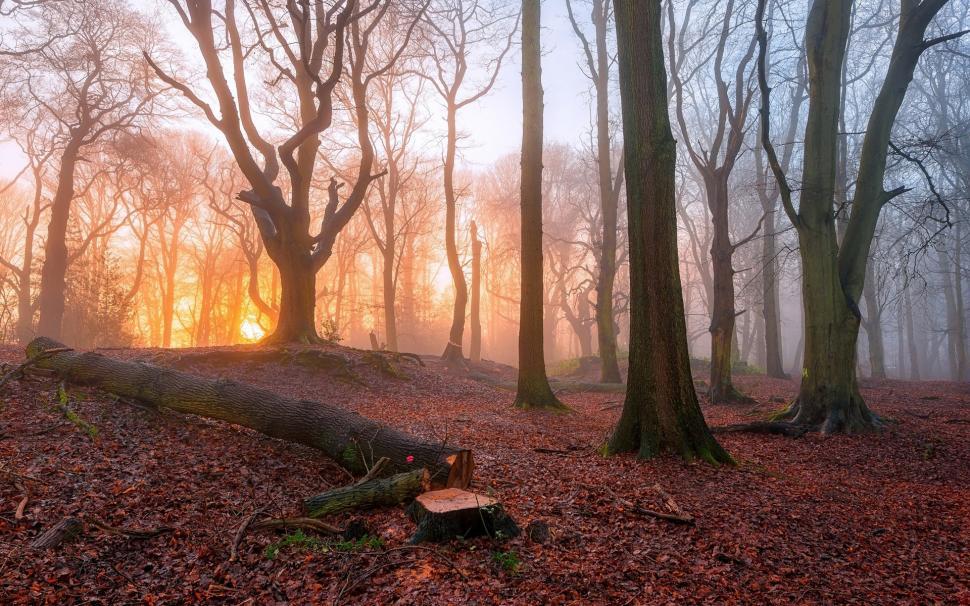 Fall Wallpaper For Laptop Sunrise In The Forest Trees Fog Morning Wallpaper