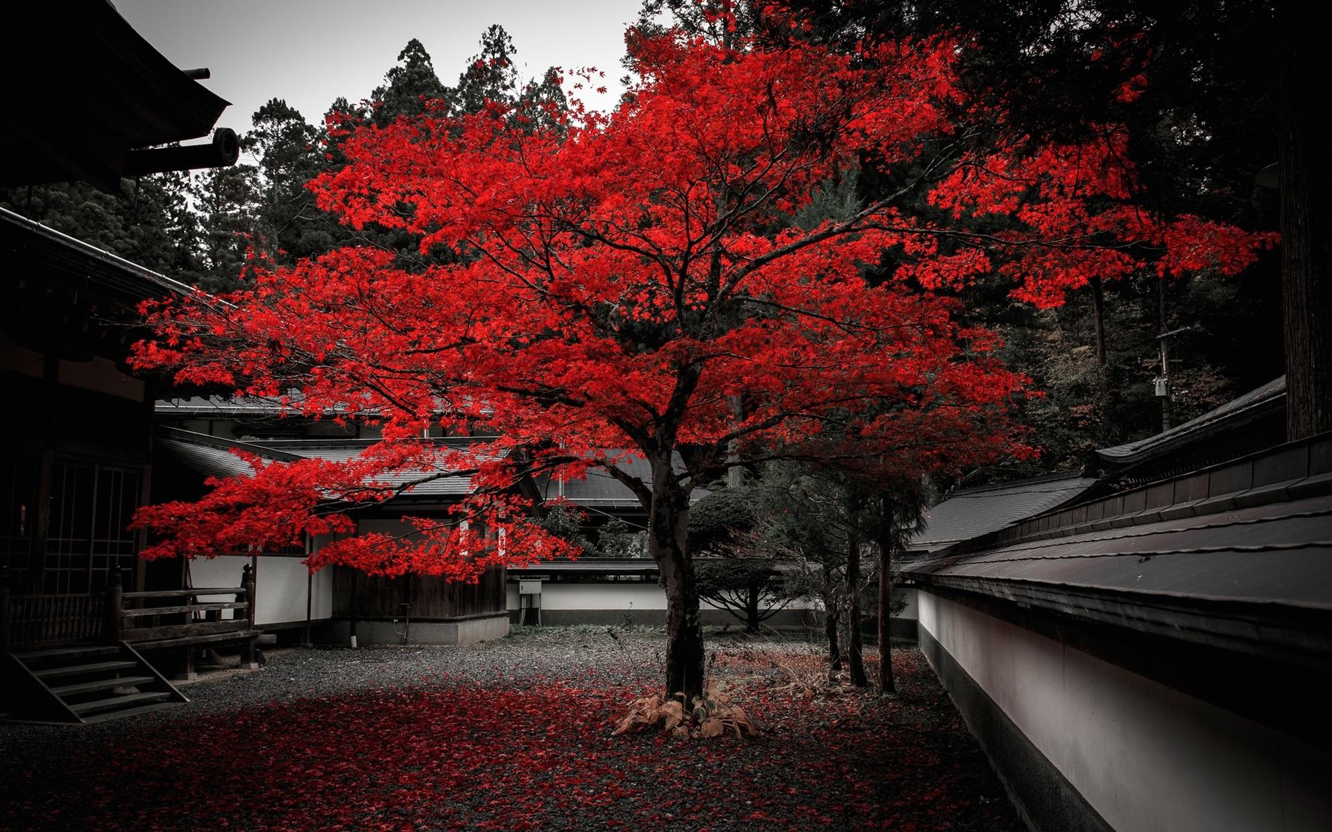 Avenged Sevenfold 3d Wallpaper Japan House Tree Red Leaves Autumn Wallpaper Travel