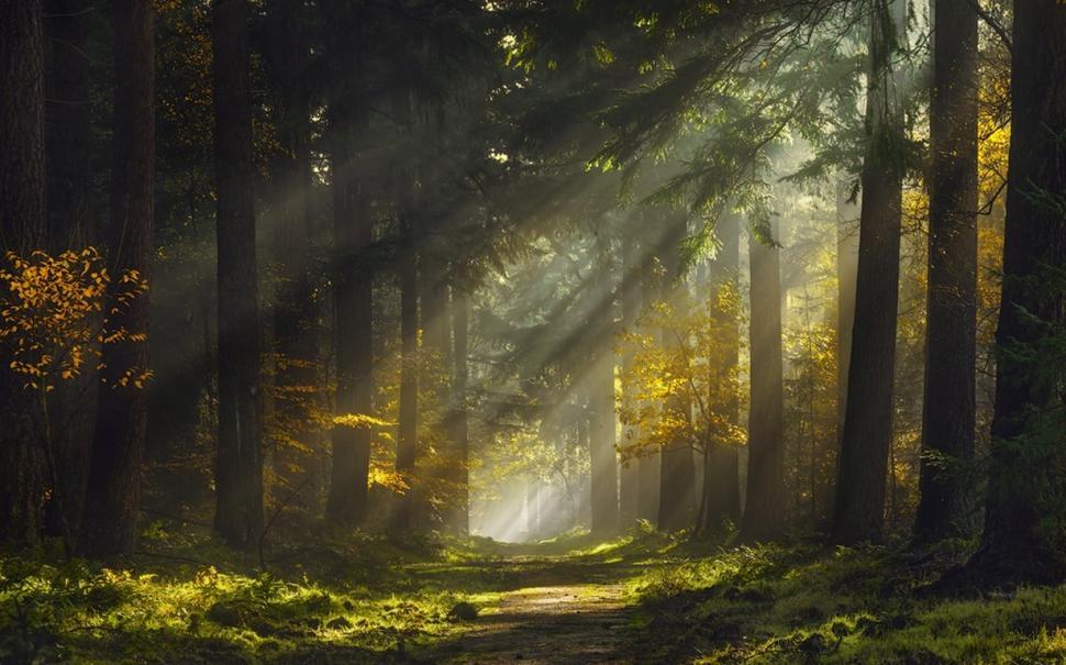 Fall Morning Sun Wallpaper Sun Rays Morning Forest Path Mist Nature Landscape