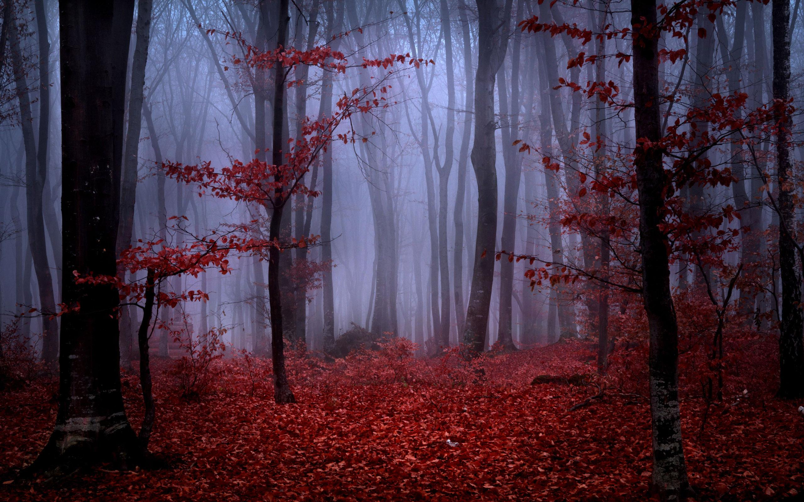 3d Purple Wallpaper For Tablet Red Autumn Foliage In Foggy Forest Wallpaper Nature And