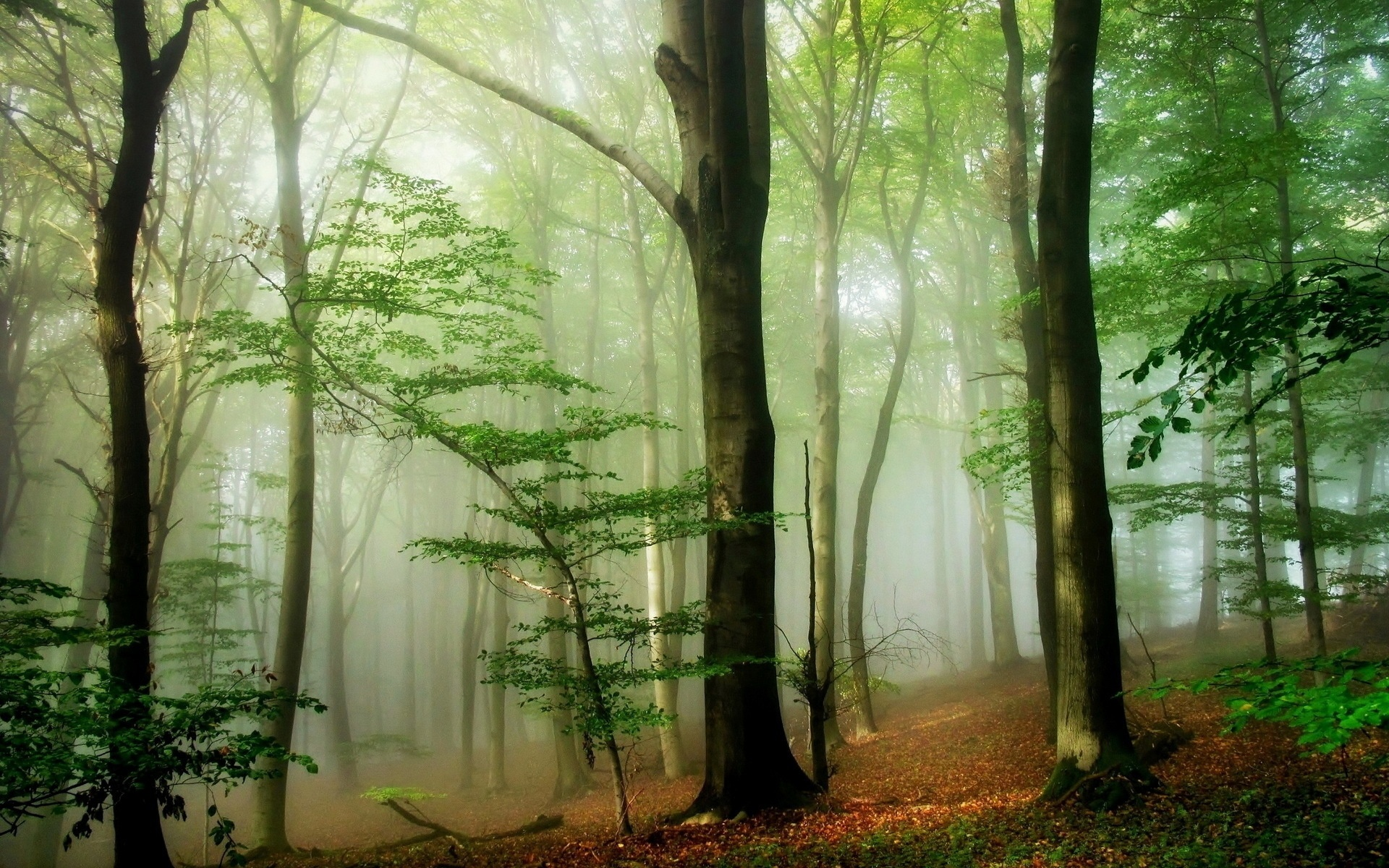 Foggy Forest wallpaper  nature and landscape  Wallpaper