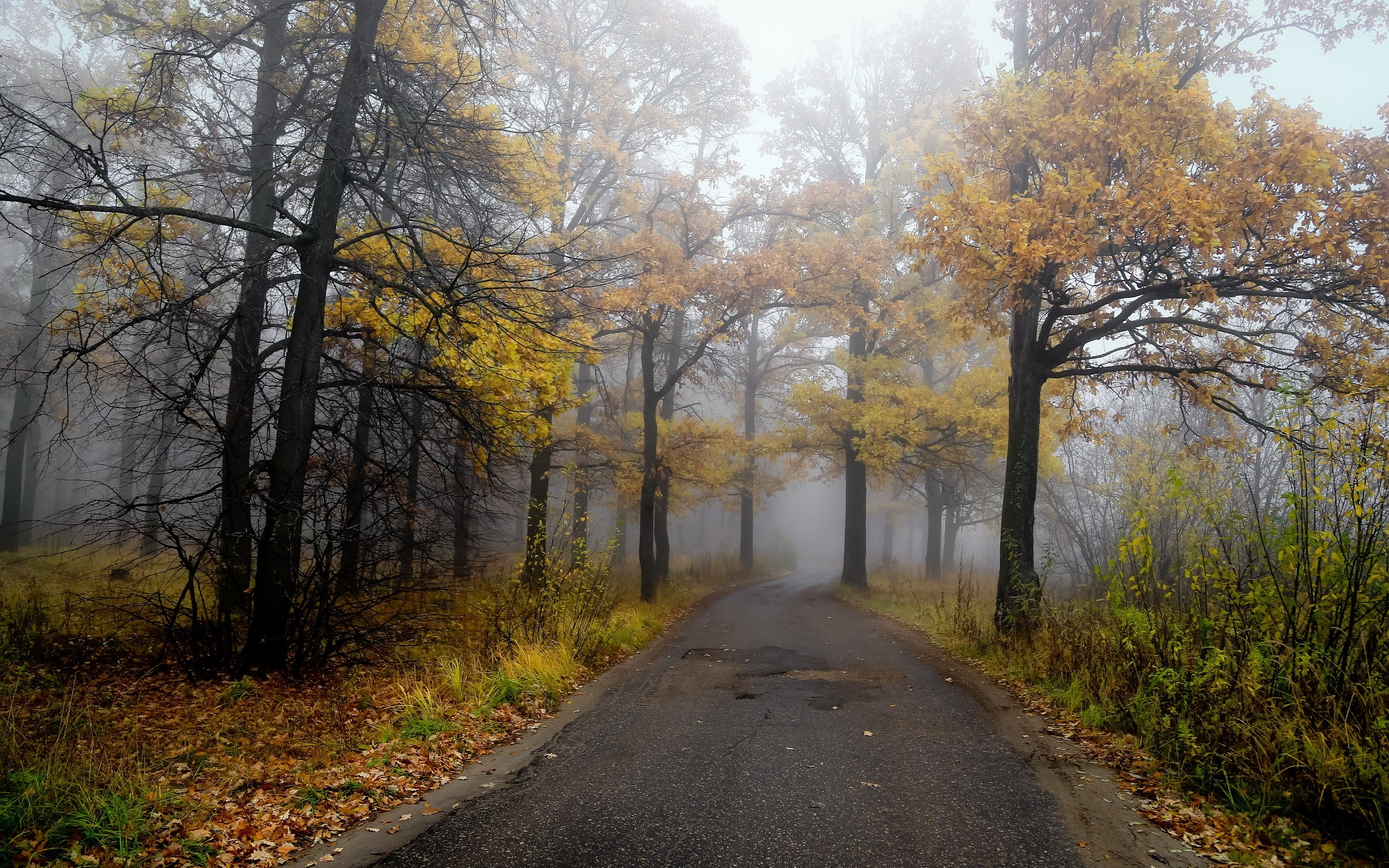 Hd Fall Painting Wallpapers Morning Road Forest Autumn Fog Wallpaper Nature And