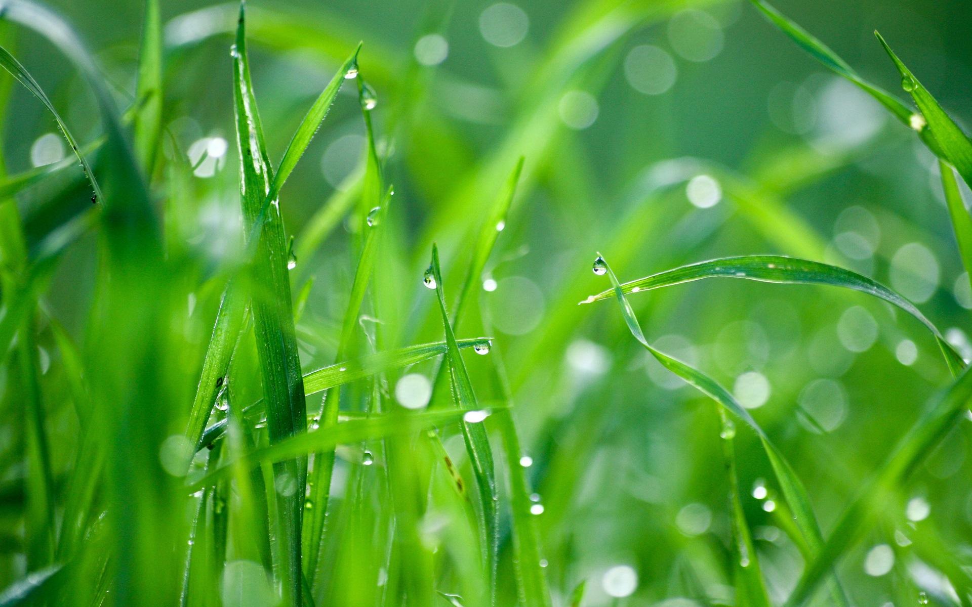 3d Water Drop Live Wallpaper Green Grass After Rain Wallpaper Nature And Landscape