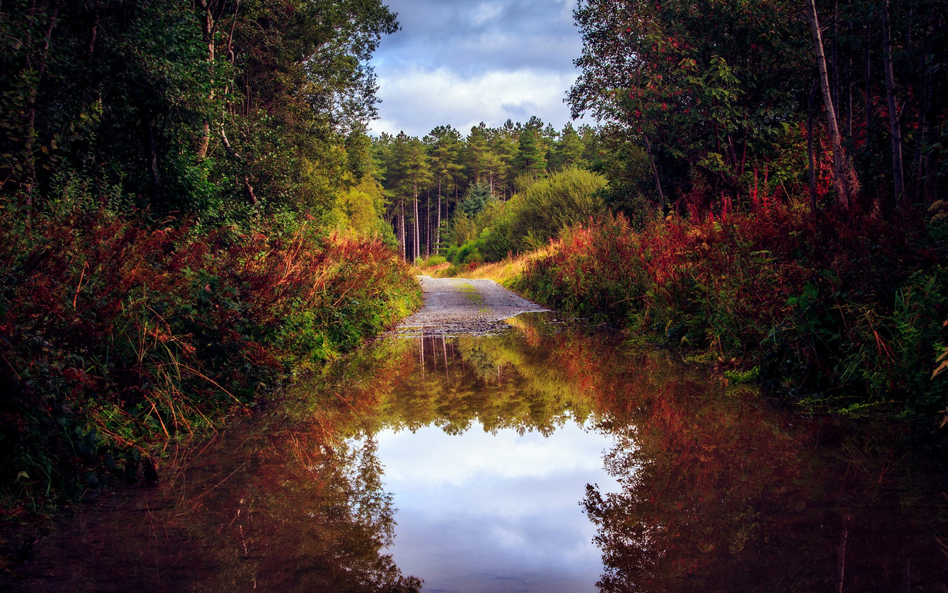 Fall Fantasy Wallpaper Nature Scenery Autumn Road Forest Trees Water Puddle